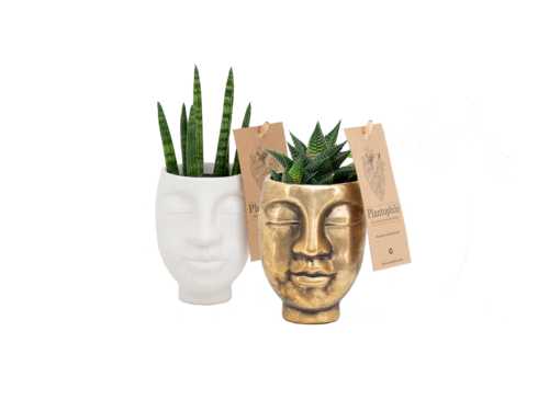 Face 2 Face pots with plants small