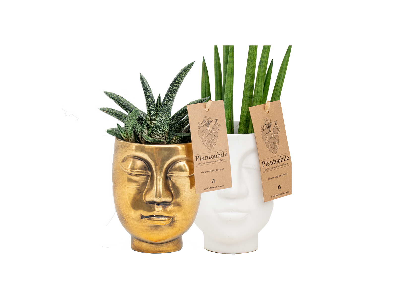 Face2Face planter with succulent