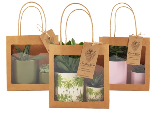 Giftbag wit succulents