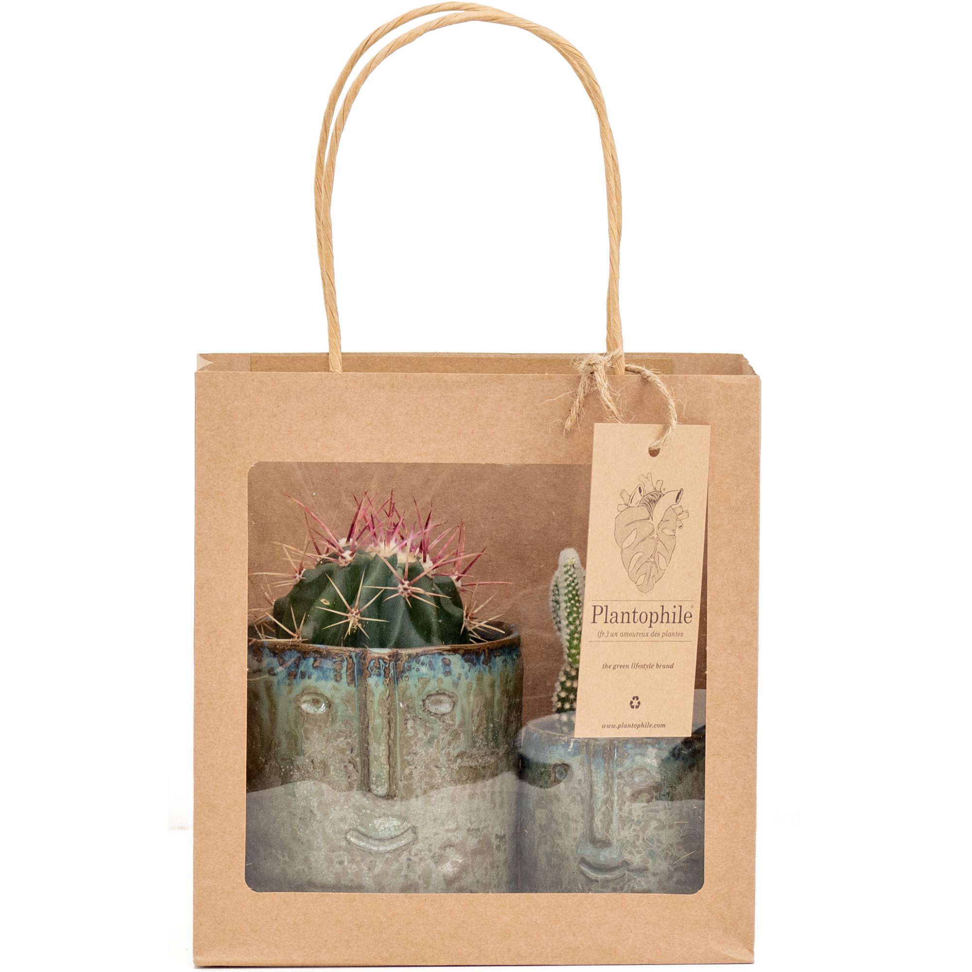 Cactus plants in trendy, face planters and giftbag
