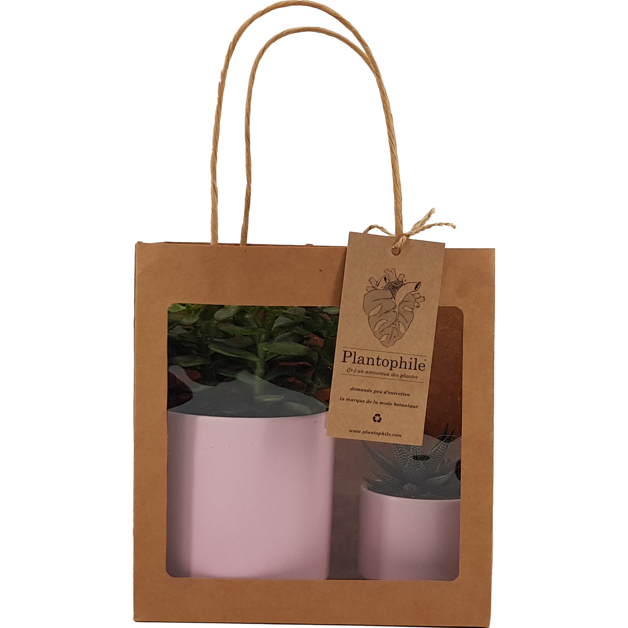 Succulent plants in trendy, planters and giftbag