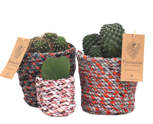 Cactus in recycled fabrics planter