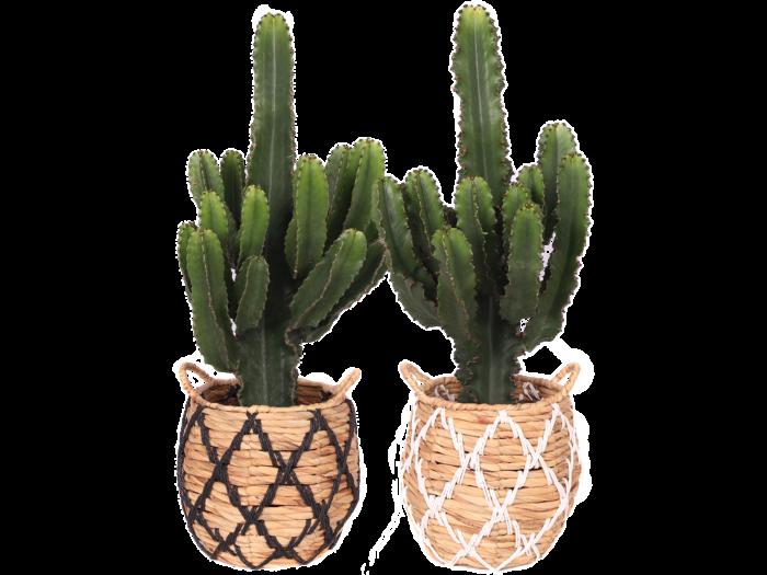 Capetown Cactus Black and White