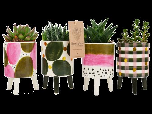 Elma Pots Plants Medium With Plants