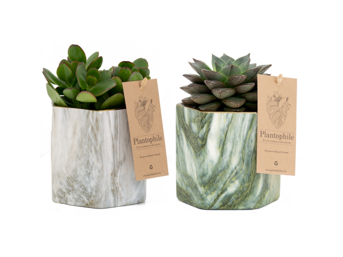 Marble Planter with succulent