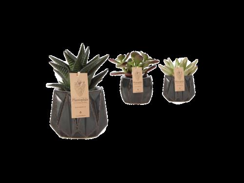 Mark Succulent Planter Small