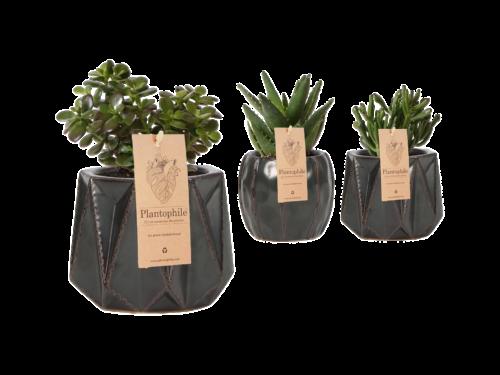 Mark Succulent Planter medium