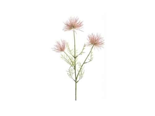 Anemone Seed Spray