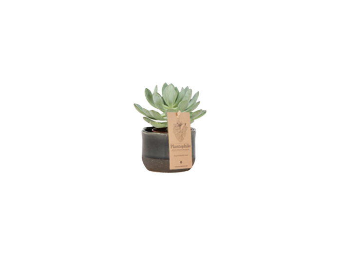 Urban Planter With succulent small