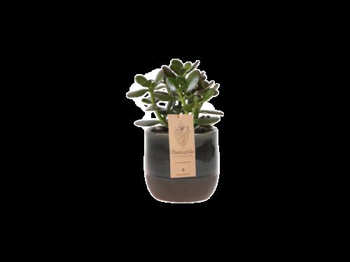 Urban Planter with Succulent Medium